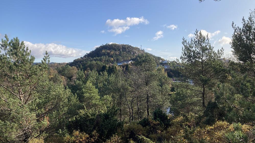 Bra utsikt mot Store Kongshaugen 80 moh mot SØ