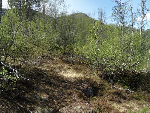 Tok mi eiga rute frå Hartevatnet opp gjennom bjørkeskogen til Eggi.